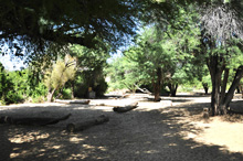 Campsite under shady trees